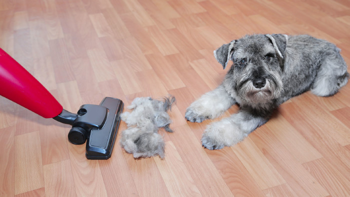 Staubsauger & Hund © maximilian_100, stock.adobe.com