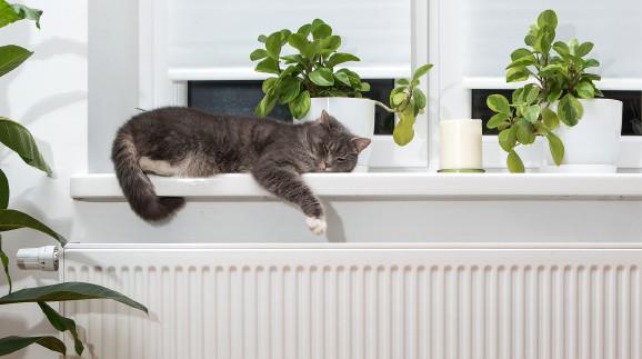 Katze auf Heizung © wip-studio, stock.adobe.com